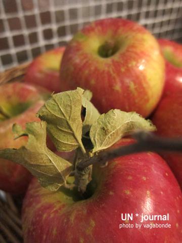 apples02.jpg